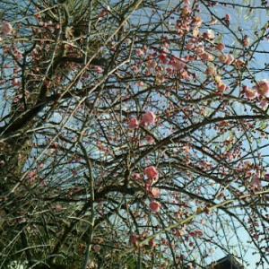 春。来ましたo(^-^)o