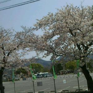 自然は正直☆春