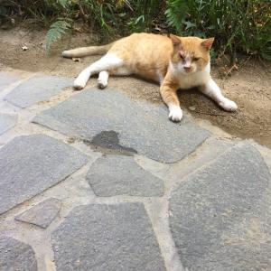 昭和の町の愛され猫