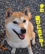 初冬の八ヶ岳山麓里山さんぽ♪保護犬ななこちゃん初めての越冬!?
