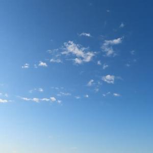 久しぶりの青空と朝顔