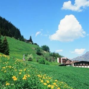 スイスお花畑。。動物病院