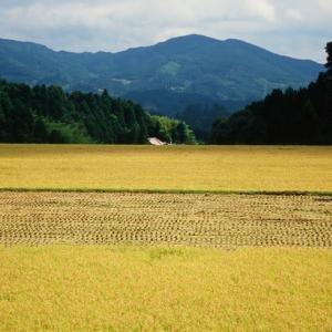 黄金色の風景(奈良県桜井市笠)
