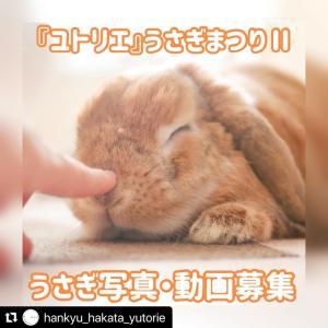 博多阪急ユトリエ『うさぎまつりⅡ』