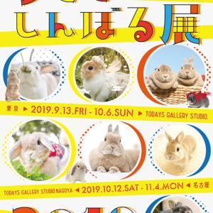 次回は【うさぎしんぼる展】浅草橋9/13から!