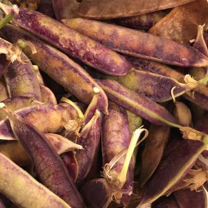 ツタンカーメン❣️赤えんどう豆