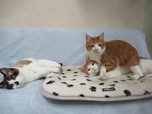 にゃんこ部屋の住人達 ~猫布団