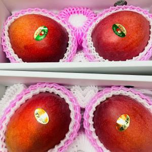 美味しいマンゴーの見分け方。どちらが最良品でしょう?