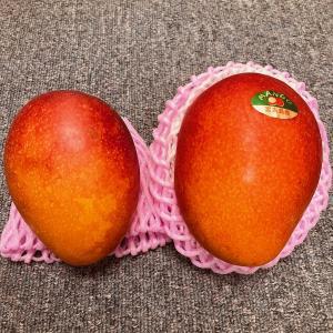 罪深い果物。マンゴー、比較してみた