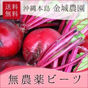 【新発売】無農薬ビーツ5キロ・10キロ!沖縄・金城農園さんより