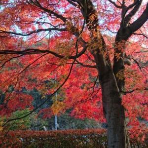 隣り町の紅葉