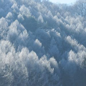 唐松の樹氷
