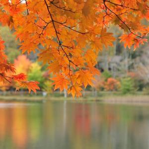 女神湖畔の紅葉