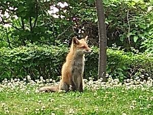 公園に子狐3匹