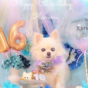 くるちゃん16歳おめでとう