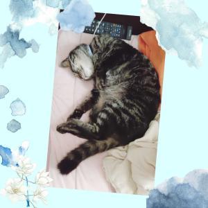 休日の猫さん