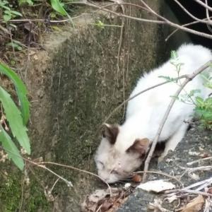 麦生西区猫事情その1保護猫