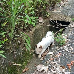 TNR で野良猫から地域猫へ