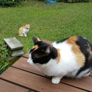 猫達全員集合