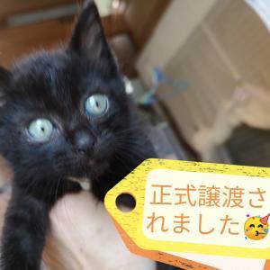 黒猫キュリア正式譲渡決定