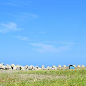 野付半島でオジロワシを見た!?