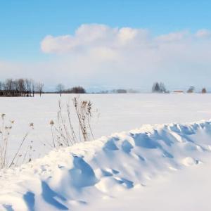 年に一度は真っ白い写真を・・・