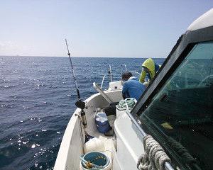 【真鯛】2017-9-10釣果【第二大洋丸】