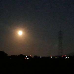 今宵は「小望月」