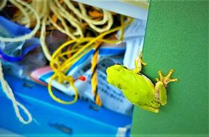 こんにちは カエルが 物置にやってきた・・