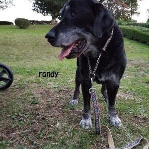 ランディ君♪