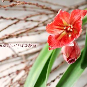 Today's Flower / いけばな教室