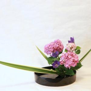 【いけばな】美しく咲く紫陽花をいける