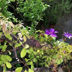 +外階段に花達が‥咲きました+