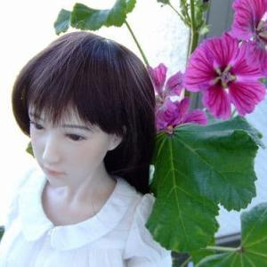 マローの花