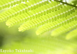 ★greenシャワー