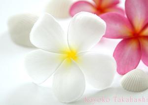 ★南国の花