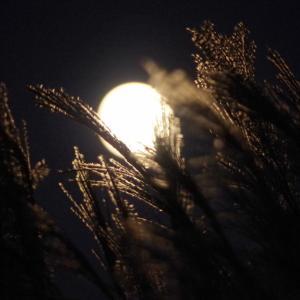 中秋の名月・月が与える影響