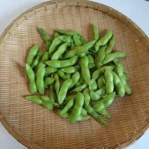 【家庭菜園・今日の収穫】今年2度目の枝豆と晩ごはん