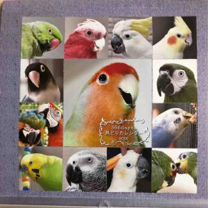 366days...鳥どりカレンダー2020