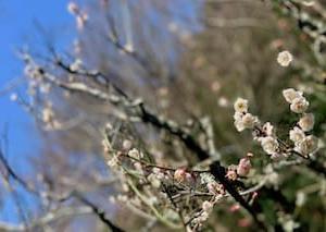 春を探しに瑞泉寺