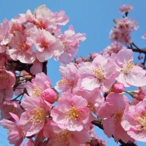 春よ、来い 【歌ってみた】