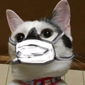 マジで簡単、縫わないマスク