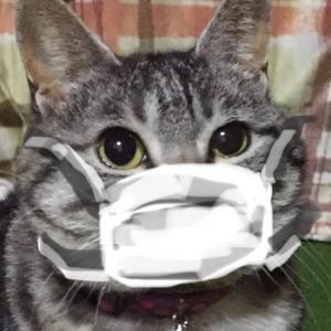 不織布マスクの洗浄&再使用