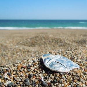 海を見ていた午後(荒井由実)歌ってみた
