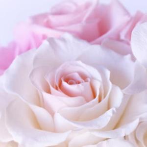 薔薇のコサージュ(オリジナルソング)