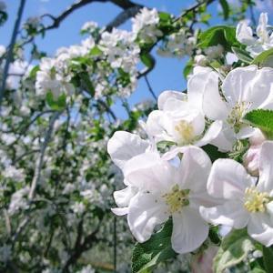 春よ、来い (松任谷由実)歌いました
