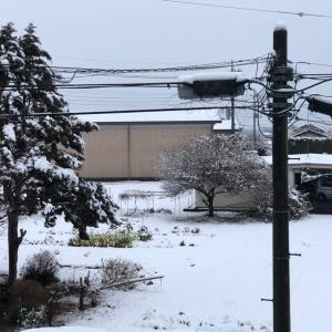 今年初の雪