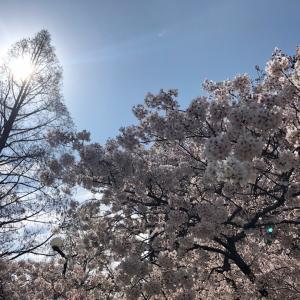 福岡も緊急事態宣言。
