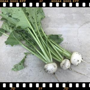 ☆ダイソーの種で収穫野菜ランキング!②☆