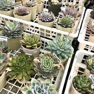 植物関係も◎